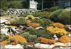 Heather, Driftwood, Sandpiper, Landscape, Terrace, Hillside